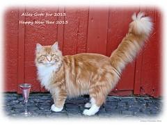 Viel Glück im neuen Jahr 2013 meine lieben Flickr Freunde! - Happy New Year 2013 my dear flickr friends!