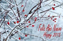 Happy New Year (ana.gr.) Tags: felicitacion escaramujo seasongreeting feliz2013 happy2013