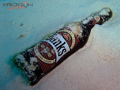 Banks, the beer of Barbados (Sharon Emma Photography) Tags: fish beer bottle underwater scuba diving barbados scubadiving caribbean banks banksbeer