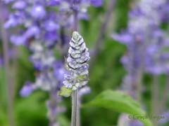 HAPPY2013!!! ( Graa Vargas ) Tags: flower purple happynewyear felizanonovo i500 graavargas 2012graavargasallrightsreserved