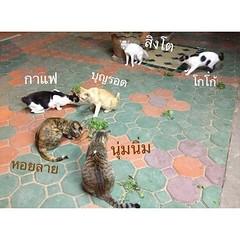 คนก็ปาร์ตี้ แมวก็ปาร์ตี้หญ้าแมว^^ ( แมวที่บ้านเหลือแค่นี้เนื่องจากหวัดแมว ปีใหม่นี้ขอให้แมวทุกตัวแข็งแรง อายุยืนเน้ออออ @marsmoonartshop  @sleepyzdragonfly
