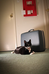 Iron Photographer 165 (puck90) Tags: cat photo noir luggage tuxedo kato colorred puck90 thelittledoglaughed utata:project=ip165 ironphotographer165