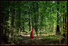 Dans les bois.... (.Sophie C.) Tags: texture photoshop wolf loup redridinghood petitchaperonrouge pareeerica imageourtime lenabem artcityart