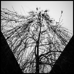 Arbre du ring (Joel Leclercq) Tags: architecture hiver ville travaux charleroi urbain ruines urbanisme
