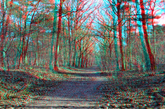 Bospad 3D (wim hoppenbrouwers) Tags: forest dorst anaglyph bospad 3d trees forst bos stereo stereopicture bomen leemputten noordbrabant woods wald