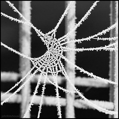 web necklace ... (John FotoHouse) Tags: bw macro frost web 100mm hoar dolan primrosevalley 2013 canon7d