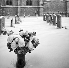 Snow, churchyard (Time to try) Tags: flowers roses blackandwhite snow cold ice church graveyard photoshop square nikon bokeh availablelight monotone nikkor oxfordshire d800 freeland meloncholy iceandsnow timetotry siverefexpro2 28f18g copyrightbhammersley2013