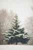 Mirror, mirror (MMortAH) Tags: christmas york xmas winter snow tree campus 50mm nikon university frost bokeh magic yorkshire 14 north nikkor snowfall afs conifer d90 flickr12days