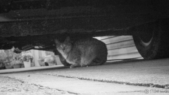 Today's Cat@2013-01-28