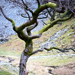 Crooked Tree thumbnail