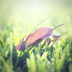 Sunlight (Jack Skipworth) Tags: light green nature colors grass dead leaf nikon warm bright lawn dry tamron 90mm d5100 theangryblender
