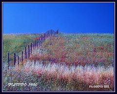 RANDAZZO - LA SIEPE - THE HEDGE (Felipe 1930) Tags: unique flickrland mmmilikeit spring4u shiningpiecesoftheworld italy4u landscapes4u seasons4u