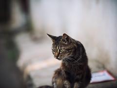 Street cat 159 (Yalitas) Tags: pet cats cat canon kat feline chat kitty gato felino katze katzen kot kedi kass gatta streetcat kotka  kocka  katte  katzchen kottur