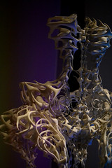 3D Bodice (Samicorn) Tags: nikon nyc newyorkcity museum exhibit art metropolitanmuseumofart met manusxmachina 3dprinting irisvanherpen resin skeleton capriole bodice dress