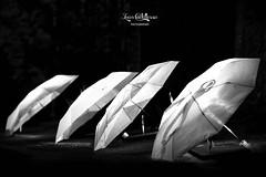 Arte.r.i.e 2016 (ivan.cortellessa) Tags: music musica danza dancer dance arterie cantalupo sabina scuola di fotografia digitale ballerina ballerino nero black night notte white bianco ombrello omnrelli umbrella jazz contrabbasso