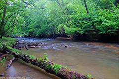 UmsteadPark+1_8454_TCW (nickp_63) Tags: scenic river scene william umstead state park raleigh north carolina long exposure creek tree log forest green water