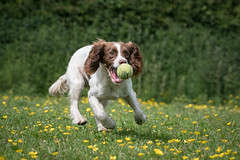Dog Photography by Gerry Slade-714 (Photography By Gerry Slade) Tags: dogphotographer gerryslade wwwgerrysladecouk