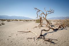 Death Valley (Channed) Tags: america amerika california deathvalley mesquiteflatdunes noordamerika us usa unitedstates unitedstatesofamerica vs verenigdestaten chantalnederstigt