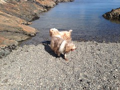 2016 09 19 Cattle Point_0020 (Blake Handley) Tags: blake blamar cattlepoint oakbay victoria bc britishcolumbia vancouverisland canada dogs ocean shoreline beardedcollie beardie