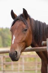 Portrait of a horse (Yvonne L Sweden) Tags: hst sweden roadtrip horse taxinge september