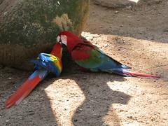 """Le Parc des Oiseaux d'Iguaçu: la grande volière aux perroquets <a style=""""margin-left:10px; font-size:0.8em;"""" href=""""http://www.flickr.com/photos/127723101@N04/29532167292/"""" target=""""_blank"""">@flickr</a>"""