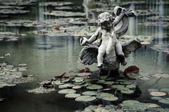 cherub (PenelopeEfstop) Tags: sculpture lily cherub mono monochrome pond architecture parkwoodestate lilypad water pool garden ontario