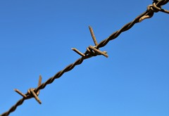 Barbed wire (breedlux) Tags: fence barbed wire