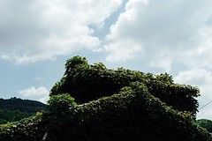 Green Covered Old House Summer Sky  Cloud Green Growth Hot Day Summer Clouds Clouds And Sky Nara Nara,Japan Atomosphere Travel Alone Time Japanese House Green Roof Summer Sky And Clouds (T.M Photos) Tags: greencovered oldhouse summersky cloud green growth hotday summerclouds cloudsandsky nara japan atomosphere travel alonetime japanesehouse greenroof summerskyandclouds