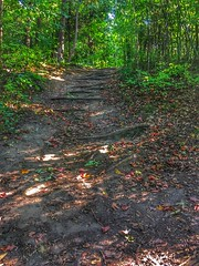 Into the woods (CCphotoworks) Tags: landscape scenic natural beautiful september outdoors nature trails forest woods