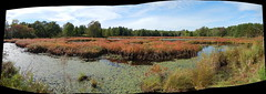 Autumn marsh panorama : Autostitch (chasdobie) Tags: panorama autostitch marsh swamp water rural westport ontario canada nikon outdoor landscape autumn leedsandgrenville leedsgrenville pano