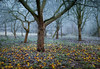 Frost in the Orchard (Mute*) Tags: winter england mist cold tree fruit landscape frost orchard apples windfall canonef85mmf18usm dofmontage