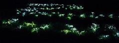 CV087 Munro Light Installations (listentoreason) Tags: usa art museum night america canon geotagged artist unitedstates pennsylvania geocoded scenic favorites places longwoodgardens score35 ef28135mmf3556isusm fieldoflight brucemunro