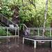 Wangi Falls Rainforest Lookout