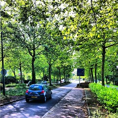 green #trees #oegstgeest #netherlands #nederland #lastsunday... (A3No) Tags: trees green netherlands nederland teg photooftheday oegstgeest clubsocial lastsunday globalnomads ipopyou igerspescara uploaded:by=flickstagram bestestoftheday instatravel instagram:photo=2415824395892064592818061 instagram:venue_name=geverstraat instagram:venue=24691958