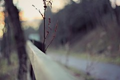 hff ({ogio}) Tags: camera winter snow plant blur field canon fence happy 50mm lights scotland focus flickr december dof bokeh no edited smooth off filter friday depth edit hff fench 650d bokehlicious bokehwhore happyfencefriday fencefridays picmonkey