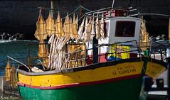 Secagem de gata (Cat drying) (RicardoPestana2012) Tags: fish portugal de boat gata lobos madeira cmara