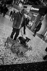 I'm watchin' ya! (oncle-bob) Tags: dogs mall göteborg puppies bitch whelps