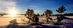 Sunrise and Pines (Impossible Breakfast Thoughts) Tags: winter light snow mountains nature beauty sunrise volcano golden nationalpark natural naturallight caldera ethereal yellowstonenationalpark yellowstone wyoming goldenhour glisten yellowstonelake naturalbeaty lakeyellowstone