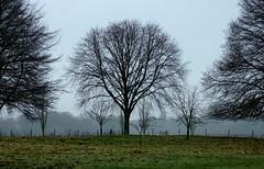 Growing space... (SteveJM2009) Tags: uk trees winter sky tree field silhouette branches january meadow hampshire shape twigs 2012 stevemaskell mottisfont hants grassistymist