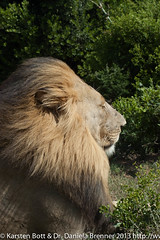 """Lions Hairdryer • <a style=""""font-size:0.8em;"""" href=""""http://www.flickr.com/photos/56545707@N05/8364610717/"""" target=""""_blank"""">View on Flickr</a>"""