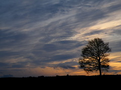 lone tree in a painted sky (rospix) Tags: uk winter sunset cloud tree nature weather silhouette wales night clouds countryside colours purple cloudy january chemtrails 2013 chemcloud geoengineering rospix
