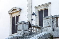 (lemank) Tags: birds cat hunting 13 vizcaya