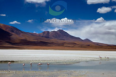 bolivia_MG_4562 (David Noton) Tags: travel southamerica nature landscape scenery desert flat natural plateau bolivia remote desolate barren arid isolated vastness altiplano endless vast bolivian saltpan southamerican naturalresources aridity highplanes highplateau tapaquilcha