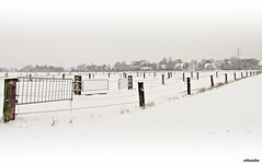 Shapes of Grey (ottosohn) Tags: winter panorama field germany landscape gate wintermorning colourless koppel blass paddocks gatter palish rumelnkaldenhausen aubruchsgraben unbunt kirschenallee trynka ottosohn mygearandme mygearandmepremium mygearandmebronze mygearandmesilver rememberthatmomentlevel4 rememberthatmomentlevel1 rememberthatmomentlevel2 rememberthatmomentlevel3 rememberthatmomentlevel5 rememberthatmomentlevel6 shapesofgrey