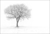 The Frosted Tree (Captain Nikon) Tags: nightphotography winter snow fog mono frost foggy silhouettes frosty haunting highkey minimalist atmospheric 352 lonesometree nikond90