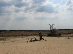 National Park De Hoge Veluwe (I chicchi) Tags: park parco holland desert natura olanda deserto nationalparkdehogeveluwe