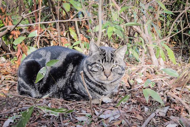 Today's Cat@2013-01-26