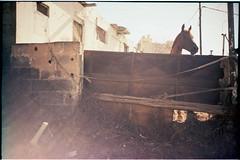 lca44_31 (Ghostwriter D.) Tags: grancanaria espaa island isla spain 2016 lca lomo lomography lomolca cross xcross telde horse