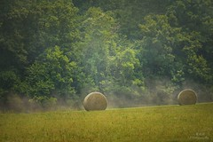 Rolling down (maria manuela photography) Tags: exploreusa travel photography traveldestination tourism adventure ontheroad perspective traveltourism holidays arkansas colors texture country haybales countrylife trees fog green forest