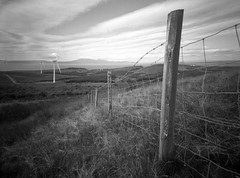 """""""New Day"""" (wheehamx) Tags: homemade camera plastic lens electric shutter busbie muir moor"""